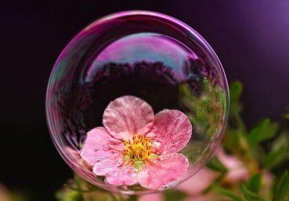 Kukka kuplan sisässä