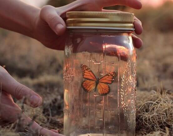 Perhonen lasipurkissa