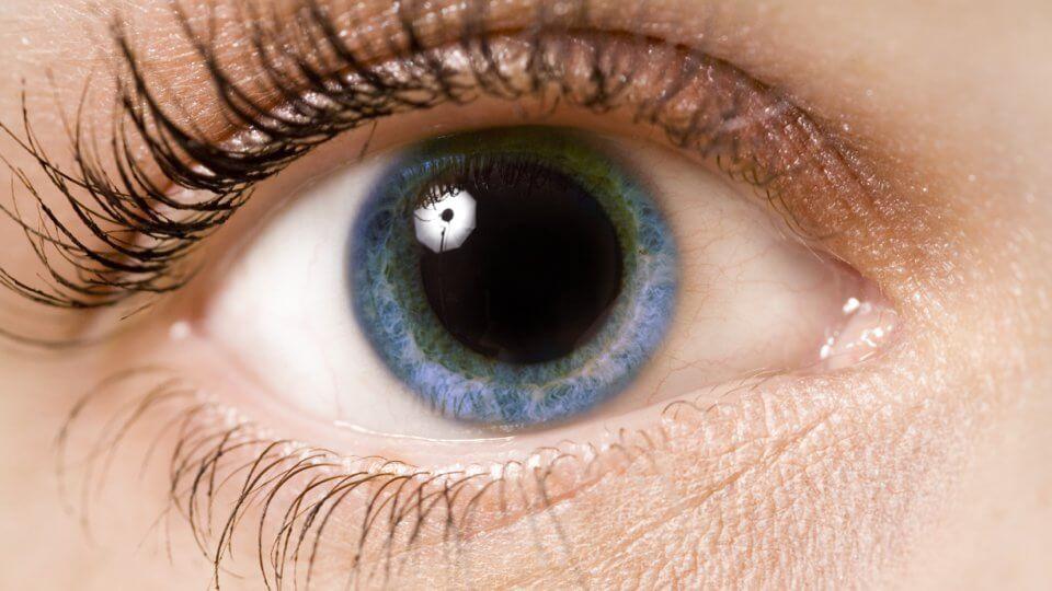 Pupillit