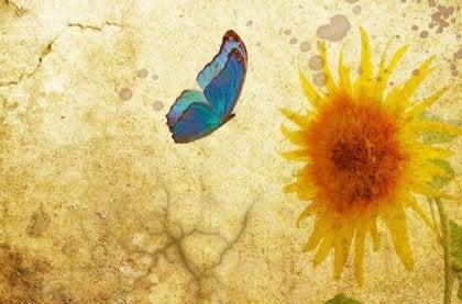 Perhonen ja kukka