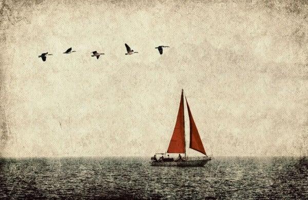 Purjelaiva ja linnut