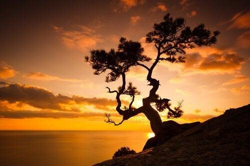 Auringonlasku ja puu