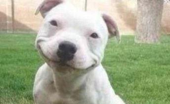 Koira hymyilee