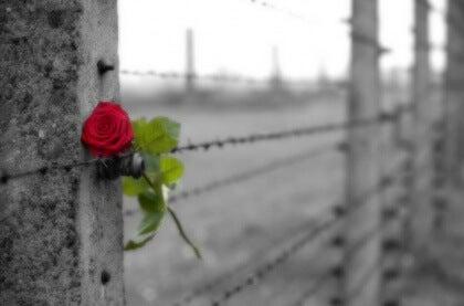 Sitaatit ruusu aidassa