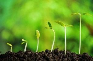 Henkilökohtainen kasvu