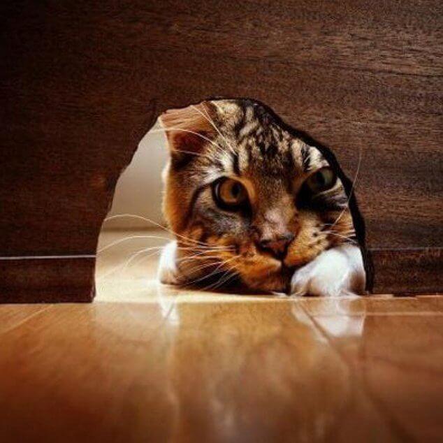 Uteliaisuus ei tappanut kissaa, vaan se teki siitä vahvemman