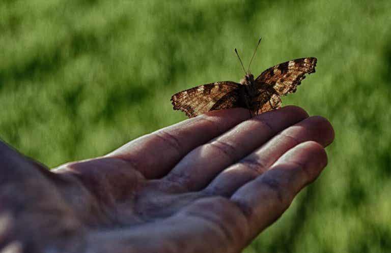 Mies ja perhonen: kun auttaminen ei auta