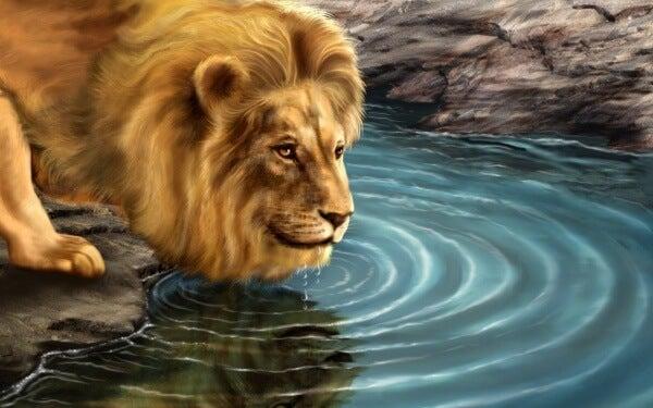 Leijona ja tämän heijastus