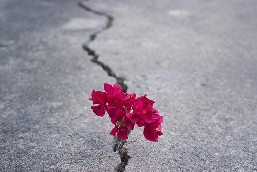 Sitkeä kukka
