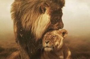 Tunnustus leijonalta toiselle