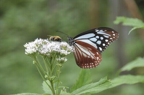 Lennä kuin perhonen, pistä kuin ampiainen