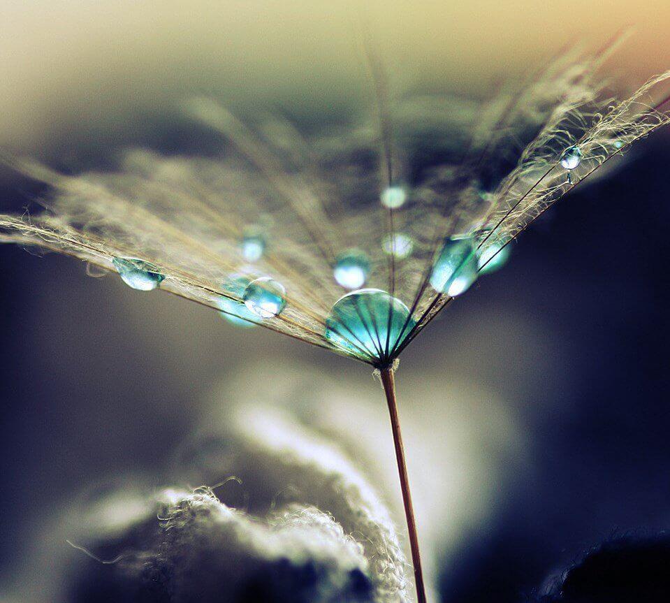 Vesitipat kasvin päällä