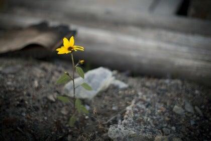 Kukka masennuksen keskellä