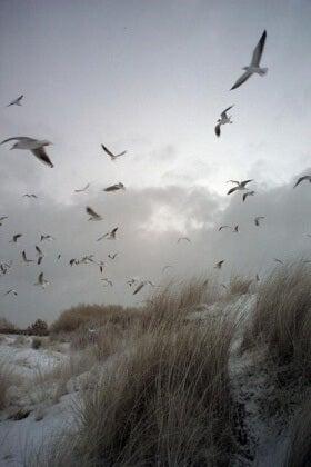 Mahdoton rakkaus lokit rannalla
