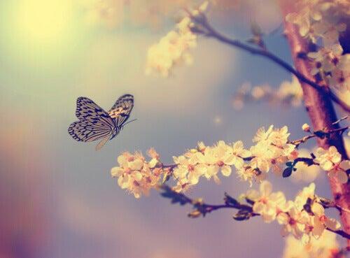 Perhonen ja kukkiva puu