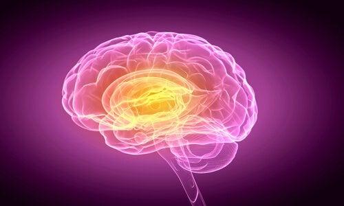 Aivot ja päätöksenteko