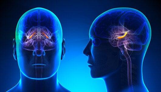 Aivotoiminta ja hippokampus