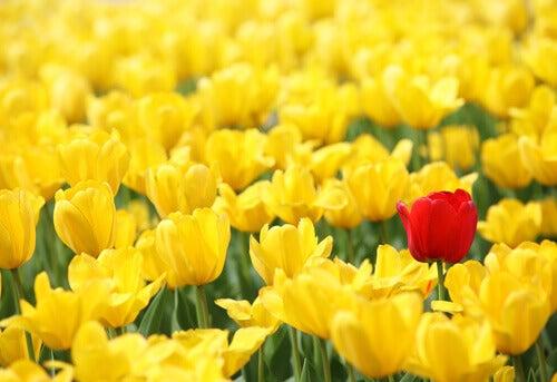 Erilainen kukka henkinen kasvu