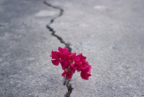 Kukat kasvavat asfaltin raosta