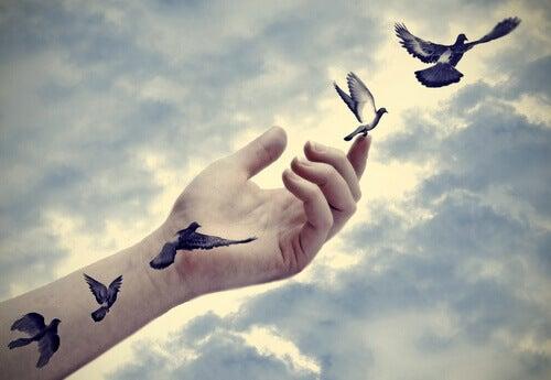 Ihminen päästää linnut vapaaksi
