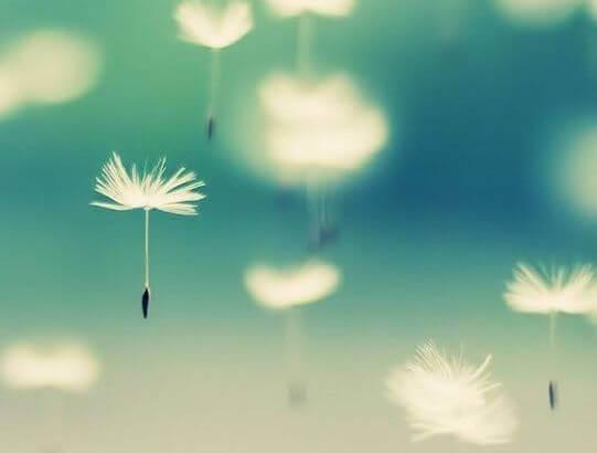 Kukkien vapautuminen