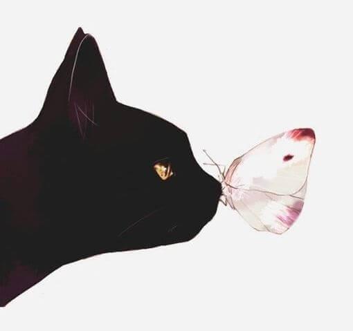 Kissa ja perhonen