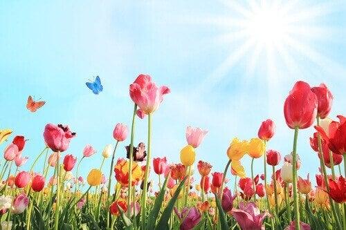 kukat-ja-aurinko