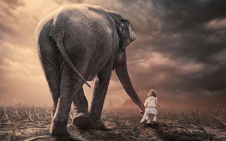 norsu ja tytto