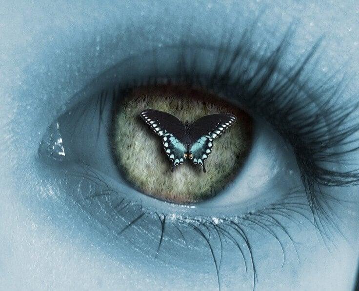 perhonen silmässä