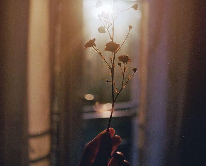 Kuivunut kukka