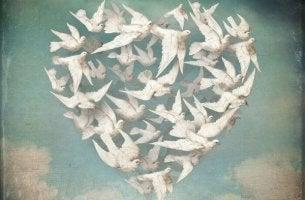 Anteeksianto, linnuista sydän