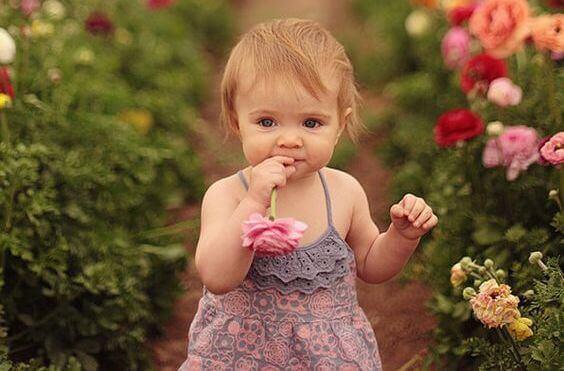 Pieni tyttö, kukka ja hajuaisti