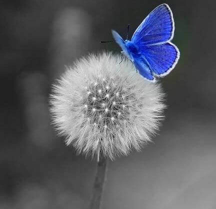 Perhonen ja kukka nauti elämästä