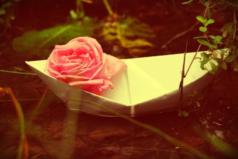 Ruusu ja rakastaminen