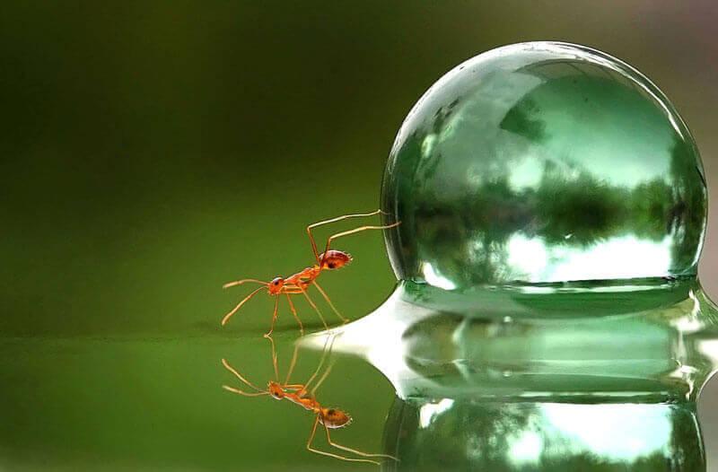 Muurahainen ja vesikupla
