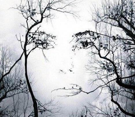 naisen kasvot puissa