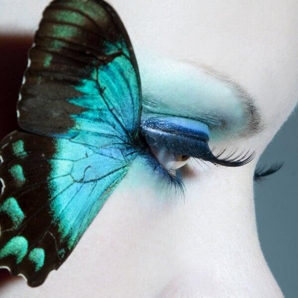 Sinisen perhosen tarina