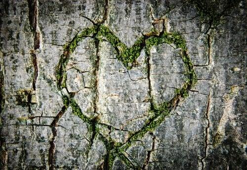 Sydän puuhun kaiverrettuna