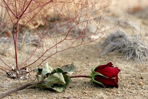 ruusu maassa