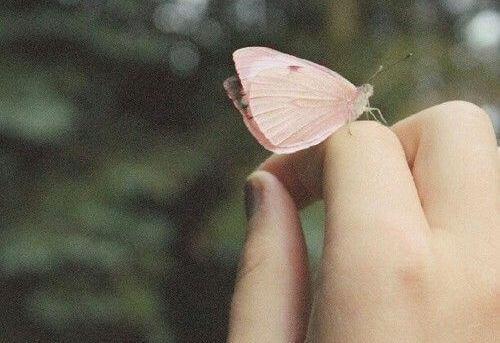 Perhonen määrätietoisesti sormella