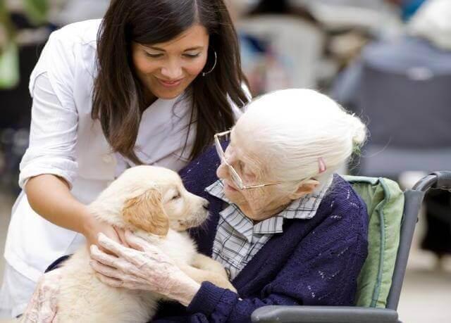 Koira ja mummo
