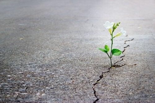Optimistinen kukka asfaltin halkeamassa