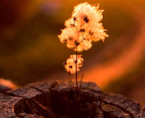 kukkasia kannossa
