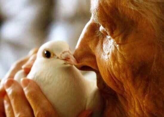 Mummo ja kyyhkynen