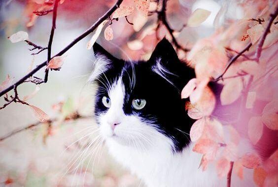 Tarina täplikkäästä kissasta ja Sinha-pääskysestä