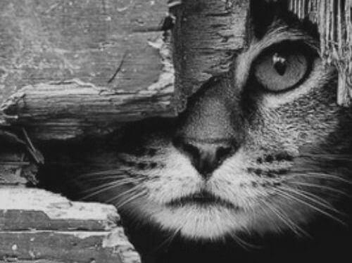kissa kurkkii