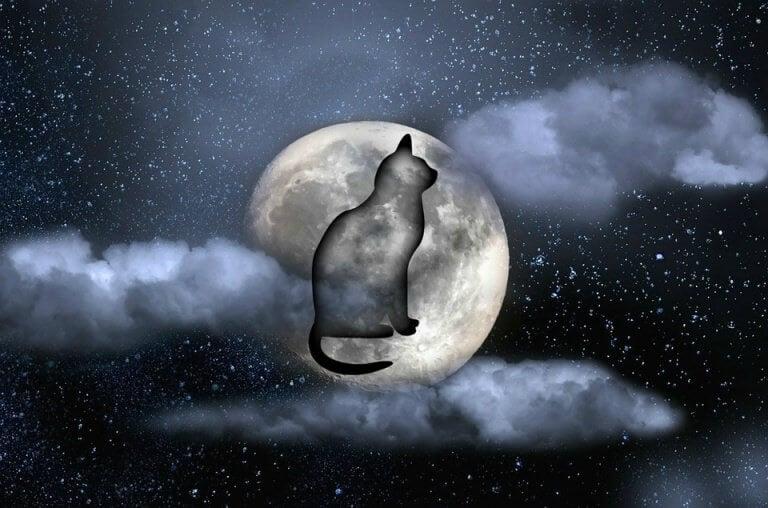 Kissa ja kuu