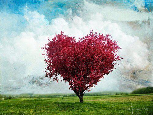Sydämenmuotoinen puu