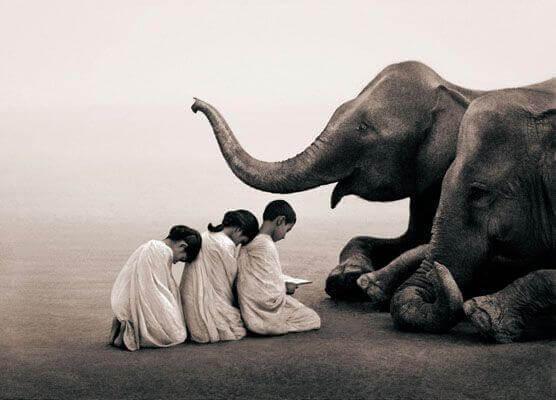 norsut ja lapset