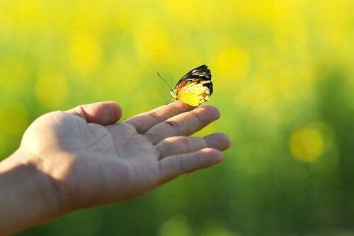 perhonen kädessä